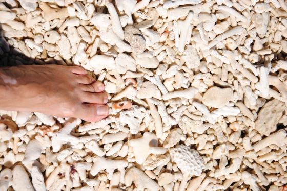 Ettore Galasso, 17 agosto 2012. Nudey Beach – Fitzroy Island – Australia (16° 56' sud, 145° 59' est)